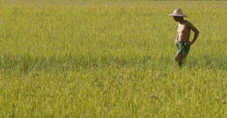 العراق يشتري نحو 80 ألف طن أرزا من تايلاند في مناقصة